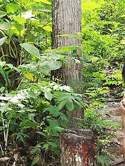Very sexy Filipina ladyboy flashing her hard dick in a tropical forest